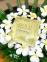 Гидрогелевая Маска Увлажнение И Восстановление С Коллоидным Золотом Petitfee GOLD Hydrogel Mask Pack 1шт 0 - Фото 1